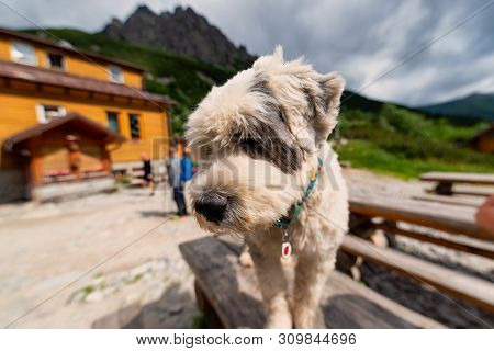 Dog Siting On The Table Near The Mountain Cottage Chata Pri Zelenom Plese
