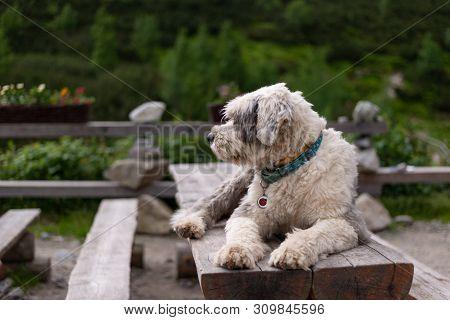 Dog Lying On The Table Near The Mountain Cottage Chata Pri Zelenom Plese