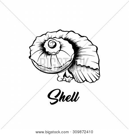 Sea Shell Black And White Vector Illustration. Spiral Shaped Nautical Creature Freehand Drawing. Exo