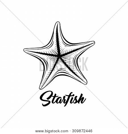 Starfish Black And White Vector Illustration. Sealife Saltwater Creature Freehand Drawing. Marine Fa