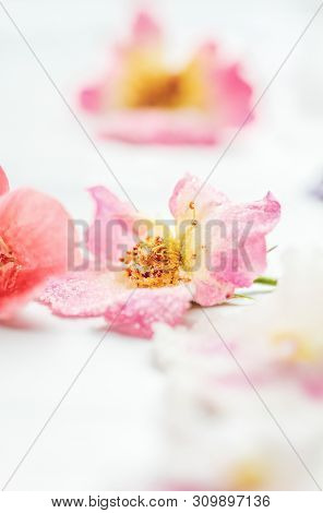 Homemade Sugared Or Crystallized Edible Rose Flowers On A White Wooden Rustic Table. Selective Focus