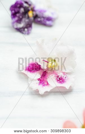 Homemade Sugared Or Crystallized Edible Violet Flowers On A White Wooden Rustic Table. Selective Foc