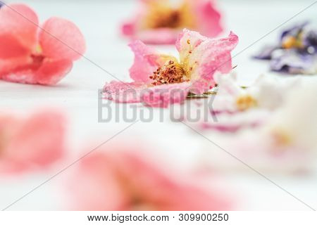 Homemade Sugared Or Crystallized Edible Flowers On A White Wooden Rustic Table. Selective Focus On R