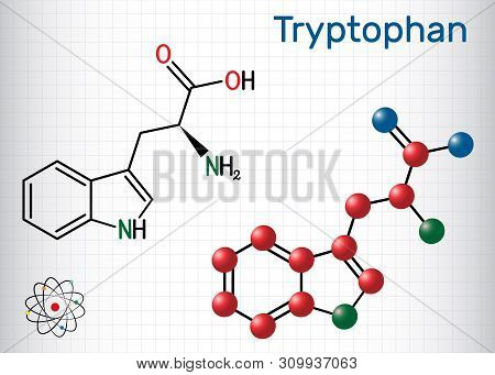 Tryptophan, Trp Or W Amino Acid Molecule, Is Used In The Biosynthesis Of Proteins. Structural Chemic