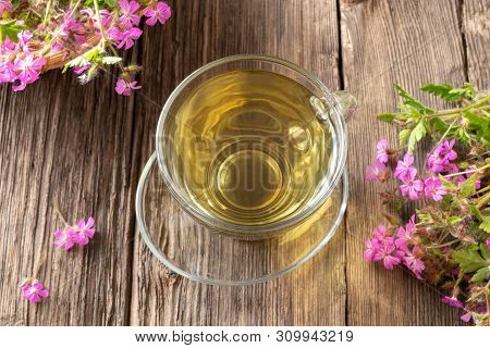 A Cup Of Herbal Tea With Blooming Geranium Robertianum Plant