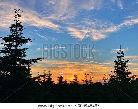 Alpine trees silhouette at sunset