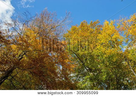 Beautiful Colourful Tree Crones On A Sunny Day