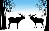 illustration of moose of two moose in winter forest poster