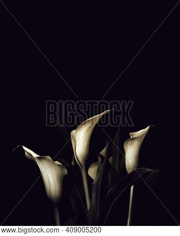 Sympathy Card With Calla Lily Flowers And Copy Space. Funeral Flowers On Dark Background