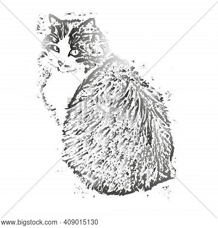 Portrait Of A Domestic Gray Cat Sitting Isolated On A White Background Close-up. Gray Long Fluffy Fu