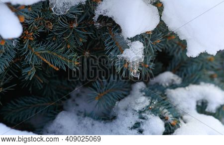 Closeup Big Flakes Of Snow On Branch. Selective Focus Of Snowflake On Tree, Shallow Depth Of Field.
