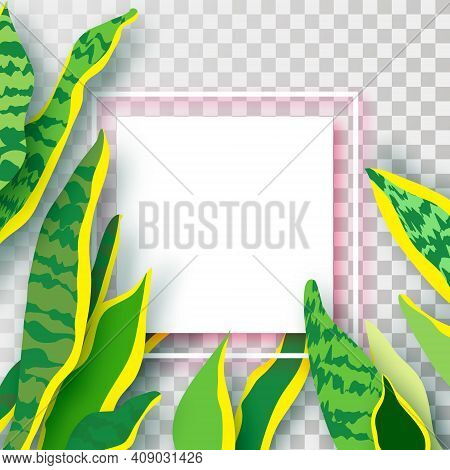 Snake Plant. Houseplant. Green Leaves Of Sansevieria Trifasciata Paper Cut Style.botanical Nature. S