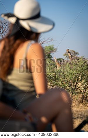 Two Giraffes In Bushes Watched By Brunette