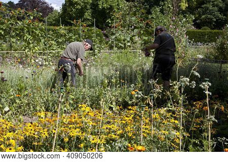 Saltash (england), Uk - August 21, 2015: Farmers In Cotehele Park, Near Saltash,  Cornwall, England,