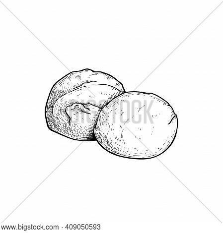 Mozzarella Cheese Balls. Hand Drawn Sketch Style Drawing Of Traditional Italian Cheese Made From Buf
