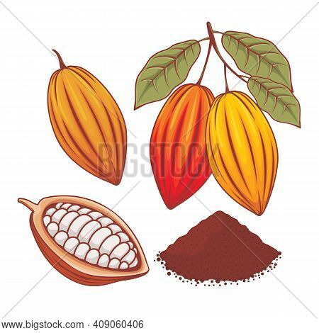 Illustration Of Whole Cocoa Bean, Ripe Cocoa And Cocoa Powder