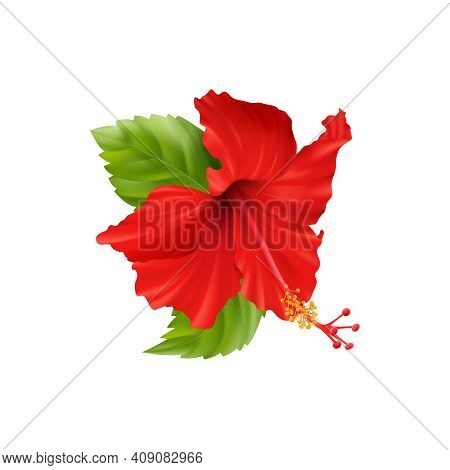 Realistic Composition With Isolated Hibiscus Flower Images With Leaves And Stems On Blank Background