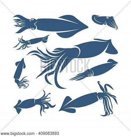 Set Of Squid Design Vector Illustration, Creative Squid Logo Template, Icon Symbol