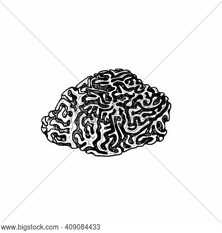 Hand Drawn Corals. Brain Coral. Underwater Reef Element. Vector Illustration Isolated On White Backg