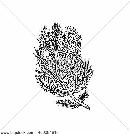 Hand Drawn Corals. Dense Feathery Black Coral. Underwater Reef Element. Vector Illustration Isolated