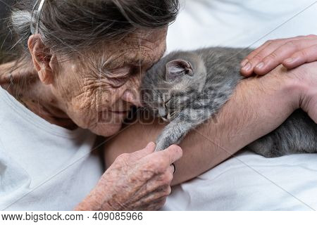 Male Assistant, Volunteer And Senior Woman With Cute Kitten Cat With Lovely Moment, Pet And An Old H