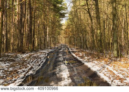 Forest Unpaved Road. Traces Of Wheels, Soggy Surface, Numerous Large Puddles. The Wheel Tracks Creat
