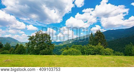 Summer Landscape In Carpathian Mountains. Beautiful Nature Scenery With Trees On The Grassy Meadow.