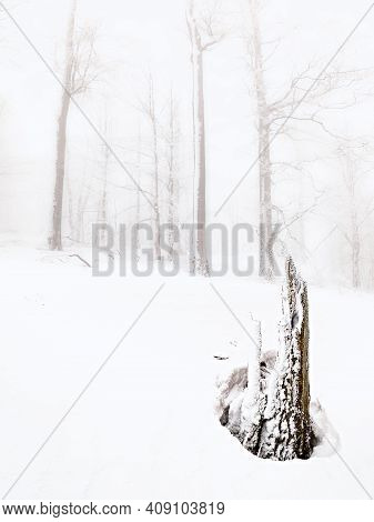 Winter Landscape, Forest Snowy Winter Trees In Cloudy Winter Weather. Winter Nature Tranquil Scene