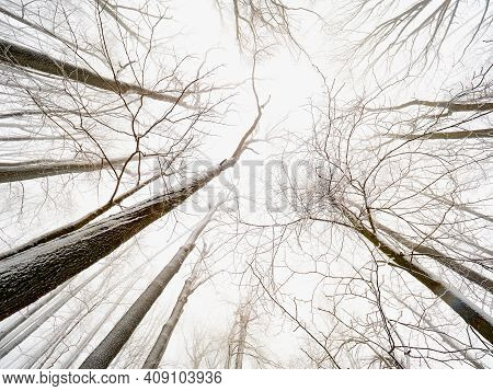 Winter Frosty Branches Of The Winter Trees Under Snowfall. Winter Forest Background