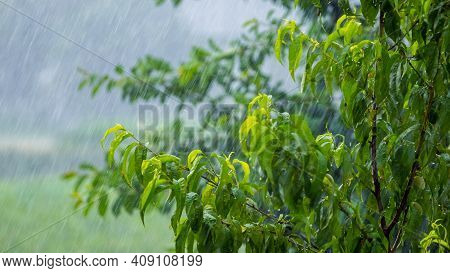 Heavy Rain In The Garden, Rainy Weather