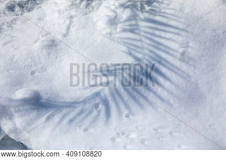 Shadow From The Branch Of A Palm Tree In The Snow -athens, Greece, 17th Of February 2021.