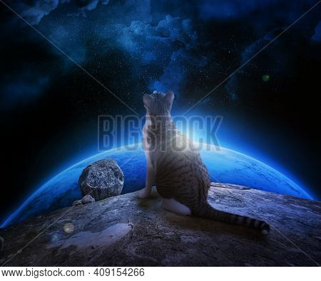 Fluffy Spotted Cat Looks At The Space Sitting On A Rock. Space, Stars, Planet, Emptiness, Rocks And