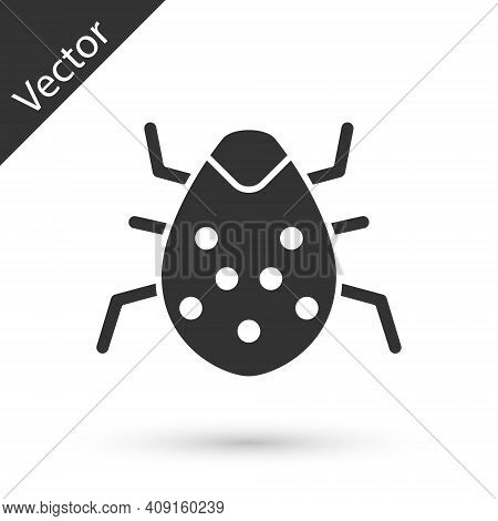 Grey System Bug Concept Icon Isolated On White Background. Code Bug Concept. Bug In The System. Bug