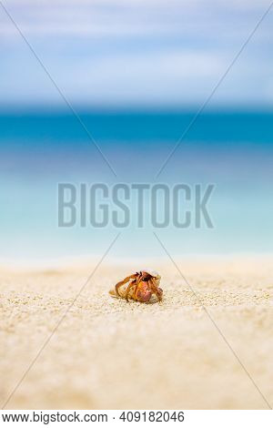 Closeup Of Cute Hermit Crab Carry Beautiful Shell Crawling On The White Sand Beach In Warm Sunlight