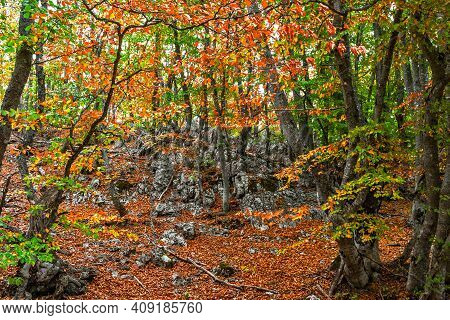 Rocks In The Autumn Beech Grove With Green And Yellow Leaves On The Trees