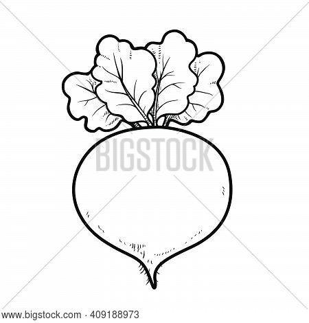 Red Beetroot Linear Drawing On White Background