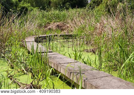 A Cement Path Leading Through A Wetland At The Suzhou River Exhibit In Suzhou China On A Sunny Day I