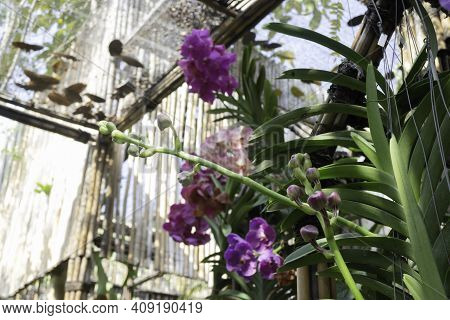 Colorful Orchid Farm Cafe And Agricultural Industry, Stock Photo