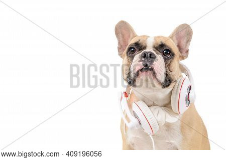Brown French  Bulldog Wear White Headphone Isolated On White Background, Pets And Animal Concept
