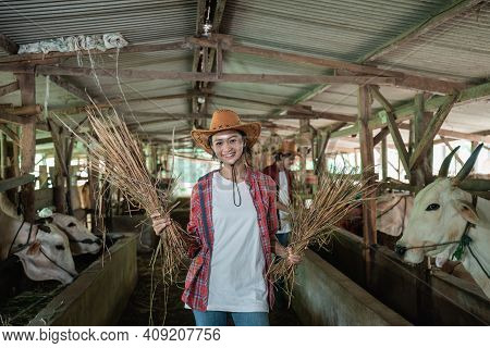 Close Up Of A Cow Farmer Girl Standing Holding Hay With Many Cows