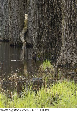 Trees And Grasses Usually On Dry Land Have Their Feet In The Water Isn A Vernal Pond In Spring At Wa