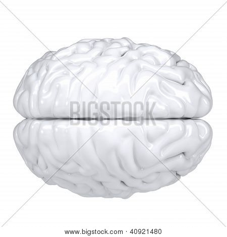 3d white human brain. View from above. Isolated render on a white background poster