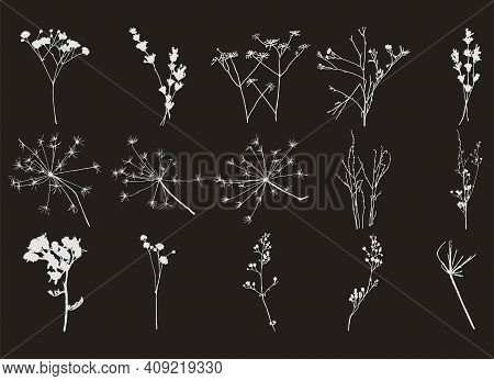 Set Of Stamps Of Field Grass And Flowers On A Black Background.