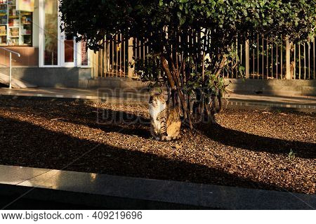 Stray Cat Sits Under A Tree In The Morning Sun On A City Street