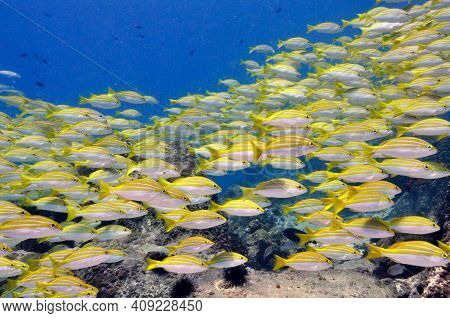 Tropical Colourful Fish