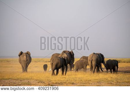 Elephant Family In The Masai Mara National Reserve In Kenya