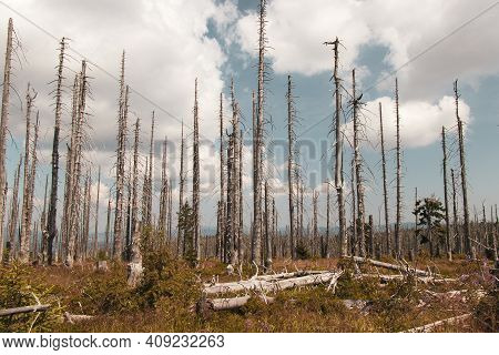 Destroyed Šumava Landscape Is Trying To Regain Its Diverse Vegetation And Biodiversity After A Stron