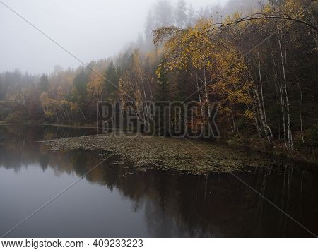 Forest Lake, Pond With Autumn Colorful Birch, Beech And Spruce Trees And Water Lily. Partialy Covere