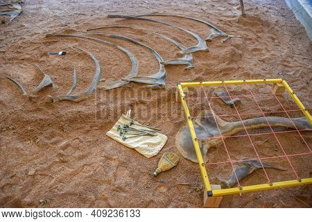 Dinosaur Bones Still Partially Encased In Dirt And Rock Laying At An Archeology Dig Site With Equipm