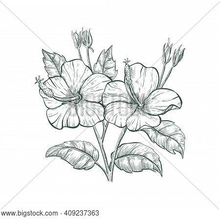 Tropical Flower Hibiscus, Vector Sketch Illustration. Sketch Hibiscus Flower